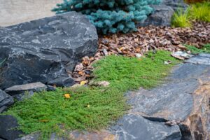 Calgary Landscape Maintenance and Services